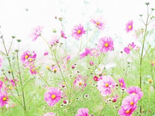 8 марта - цветы