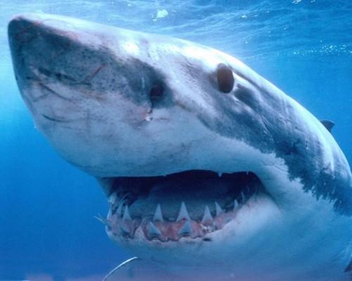 Аквариум в Праге - акула