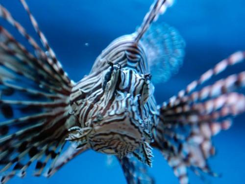 Аквариум в Праге - рыба