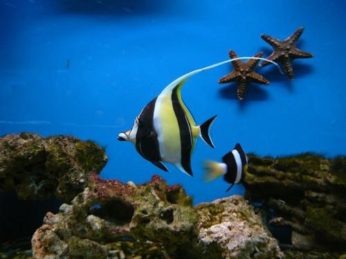 Аквариум в Праге - рыбка