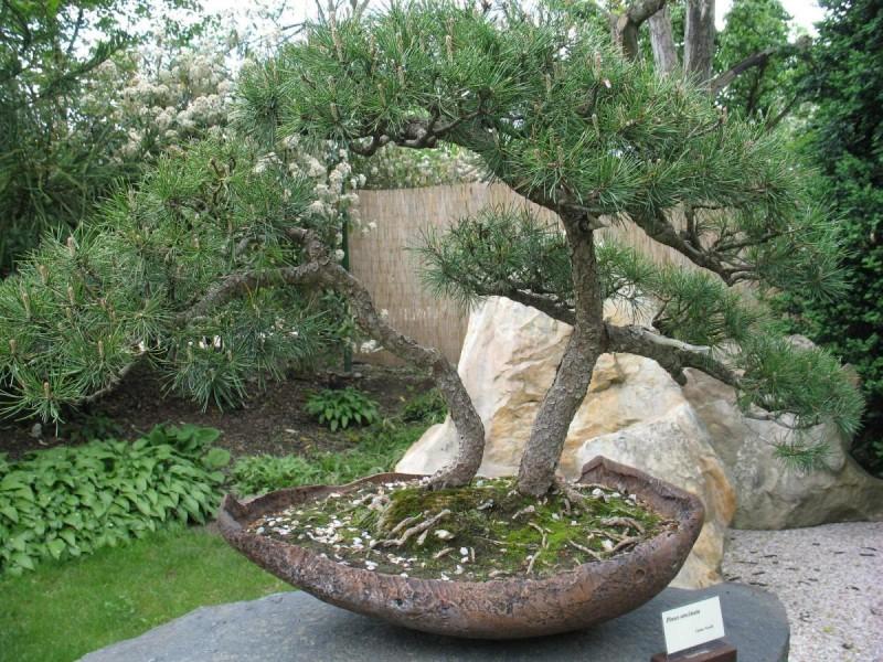 Ботанический сад 7