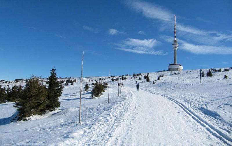 Есеник зимой