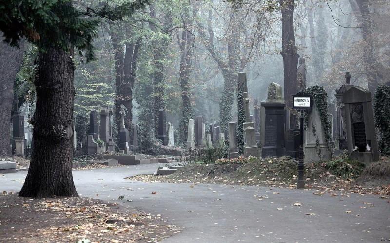 Ольшанское кладбище 8