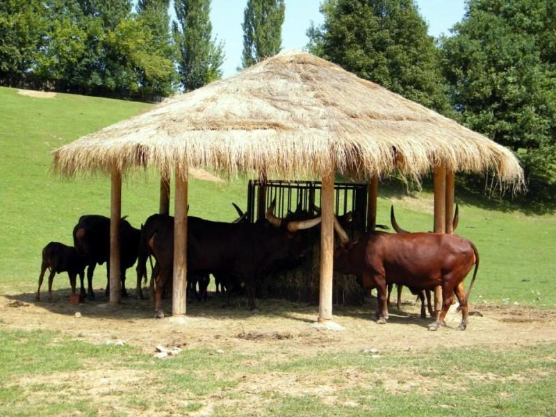 Зоопарк Двур-Кралове 3