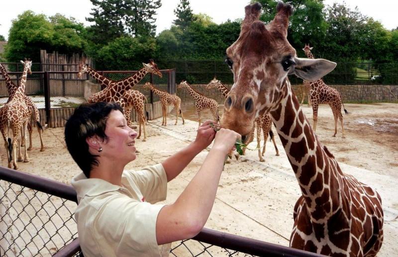 Зоопарк Двур-Кралове 4