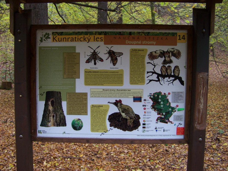 Кунратицкий лес 11