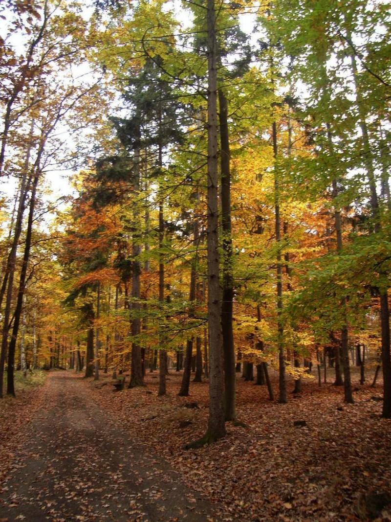 Кунратицкий лес 3