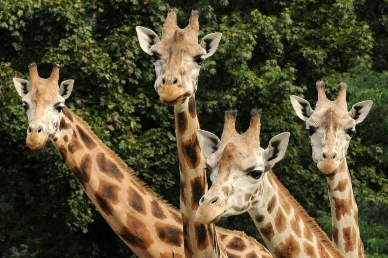 Зоопарк Оломоуц 6