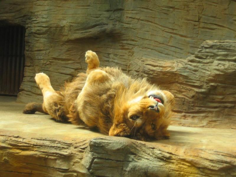 Зоопарк Оломоуц 8