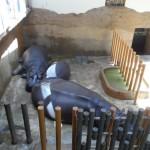 Зоопарк Острава 4