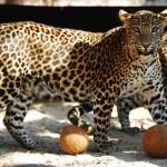 Зоопарк Острава 9