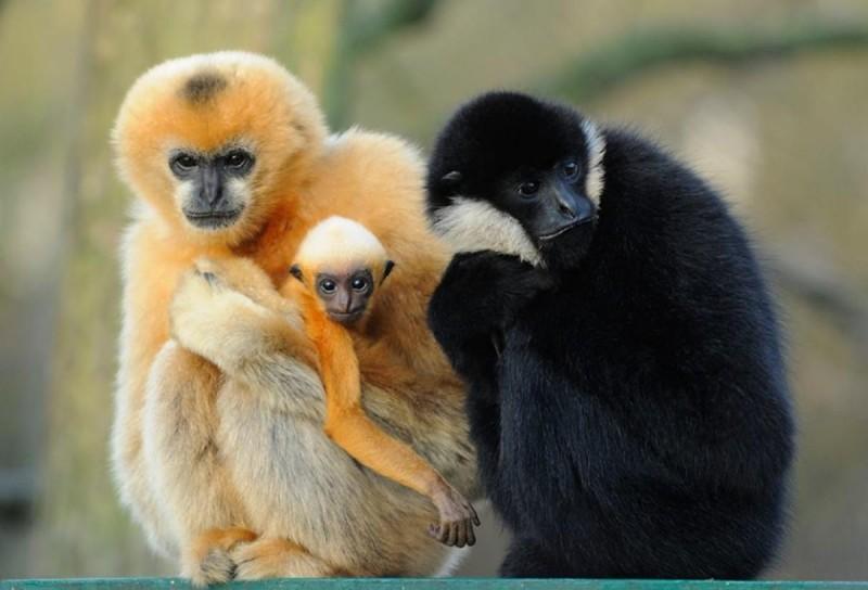 Зоопарк Пльзень 4
