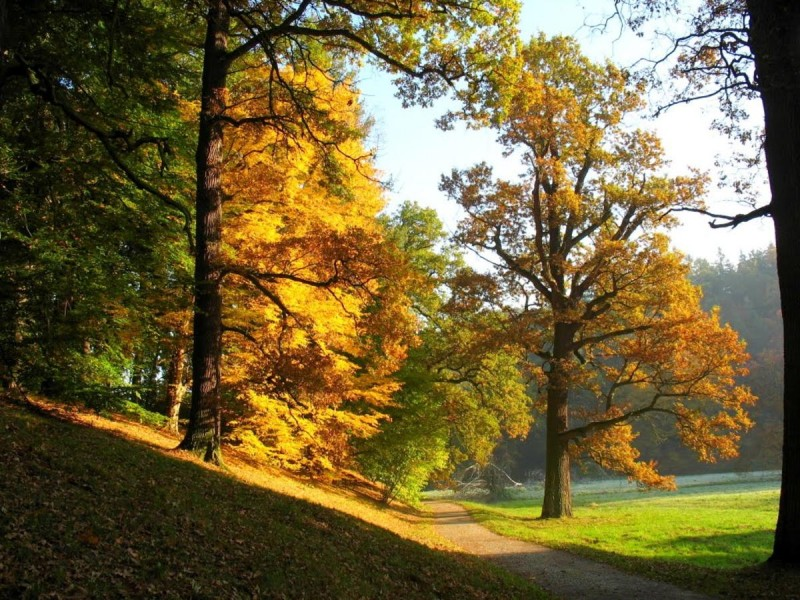Пругоницкий парк 6